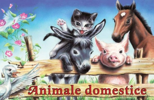 animale-domestice-pliant-cartonat